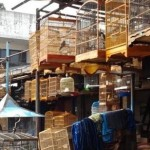 Sentra Pedagang Burung di Depok Baru