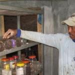 Kesuksesan Prihardono dalam Bisnis Kroto (Telur Semut)