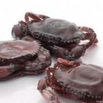 Menilik Bisnis Kepiting Soka yang Kian Menggiurkan