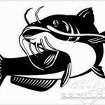 Cara Budidaya Ikan Lele Hingga Sukses