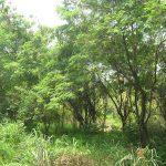 Peluang Usaha Di Kampung Jasa Membersihkan Tanah Kosong